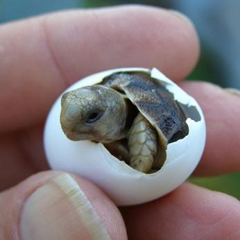 fotos-de-tartarugas-4